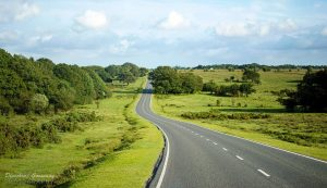 Driving whilst Disqualified - Road in the New Forest